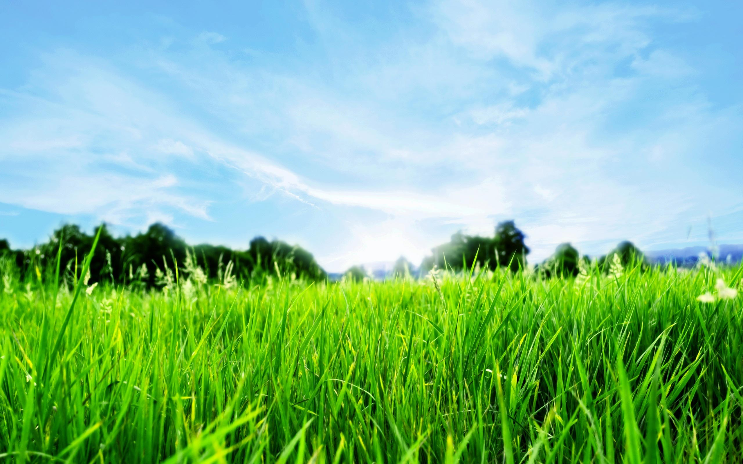 Image gallery hd lawn for Long grass landscaping